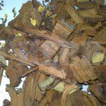 akar kayu