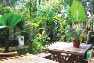 Herba popular  di Risda Semaian dan Landskap Sdn Bhd